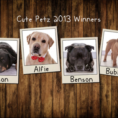 Cute Petz Competition 2013