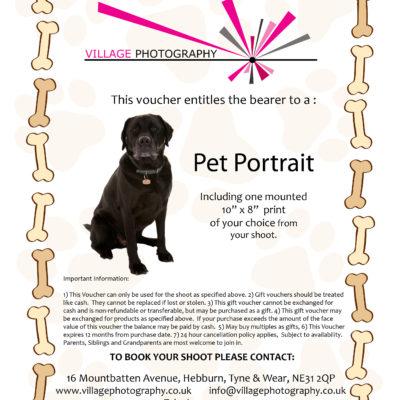 Pet Portrait shoots, Village Photography Newcastle