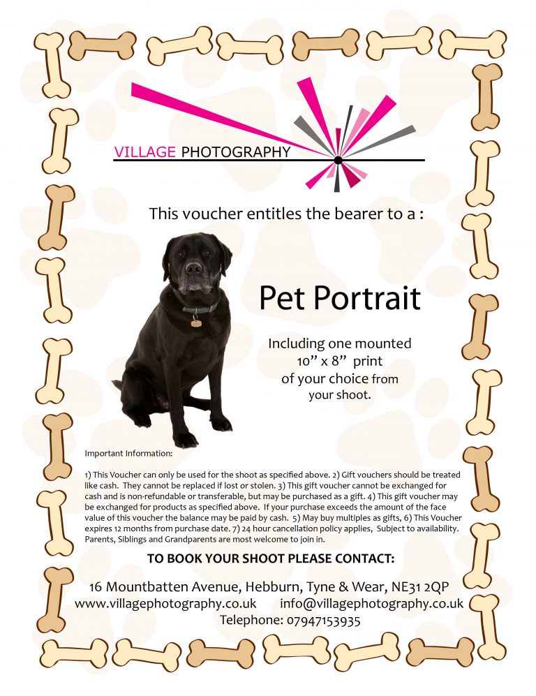 Pet Portrait shoots, Village Photography Newcastle