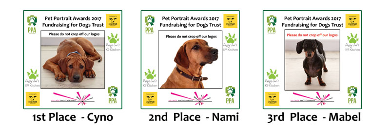 Pet Portrait Awards 2017